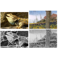 Jmin-image based color-texture segmentation using watershed and hierarchical clustering