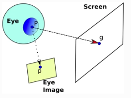 Screen-Light Decomposition Framework for Point-of-Gaze Estimation Using a Single Uncalibrated Camera and Multiple Light Sources